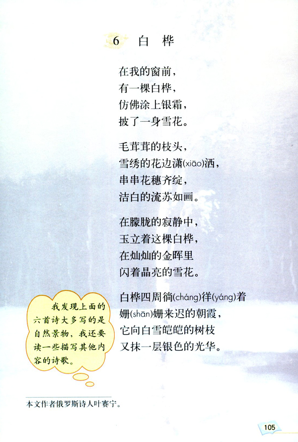 「6」 白桦
